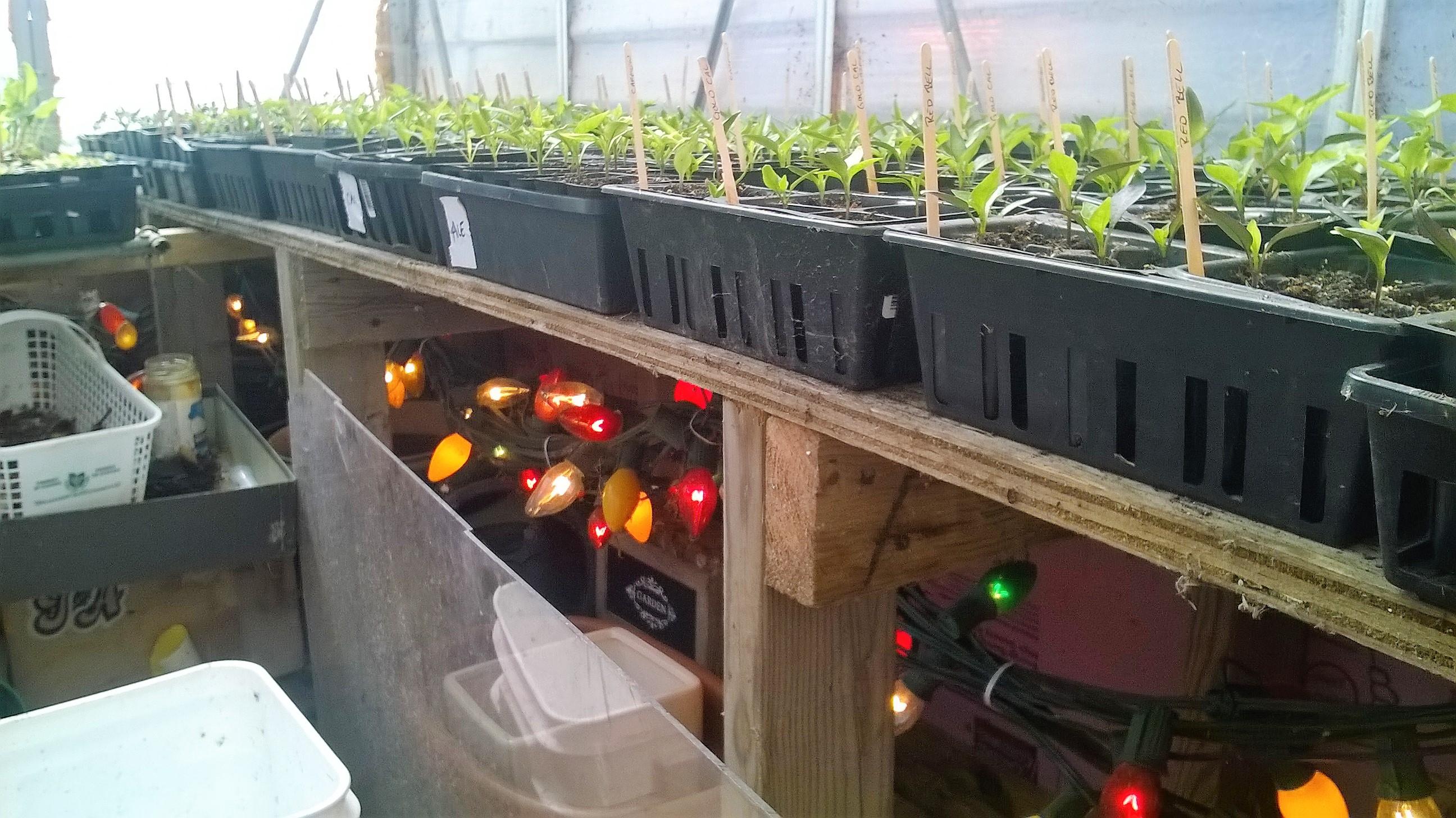 Seedling Roundup – April 20, 2016