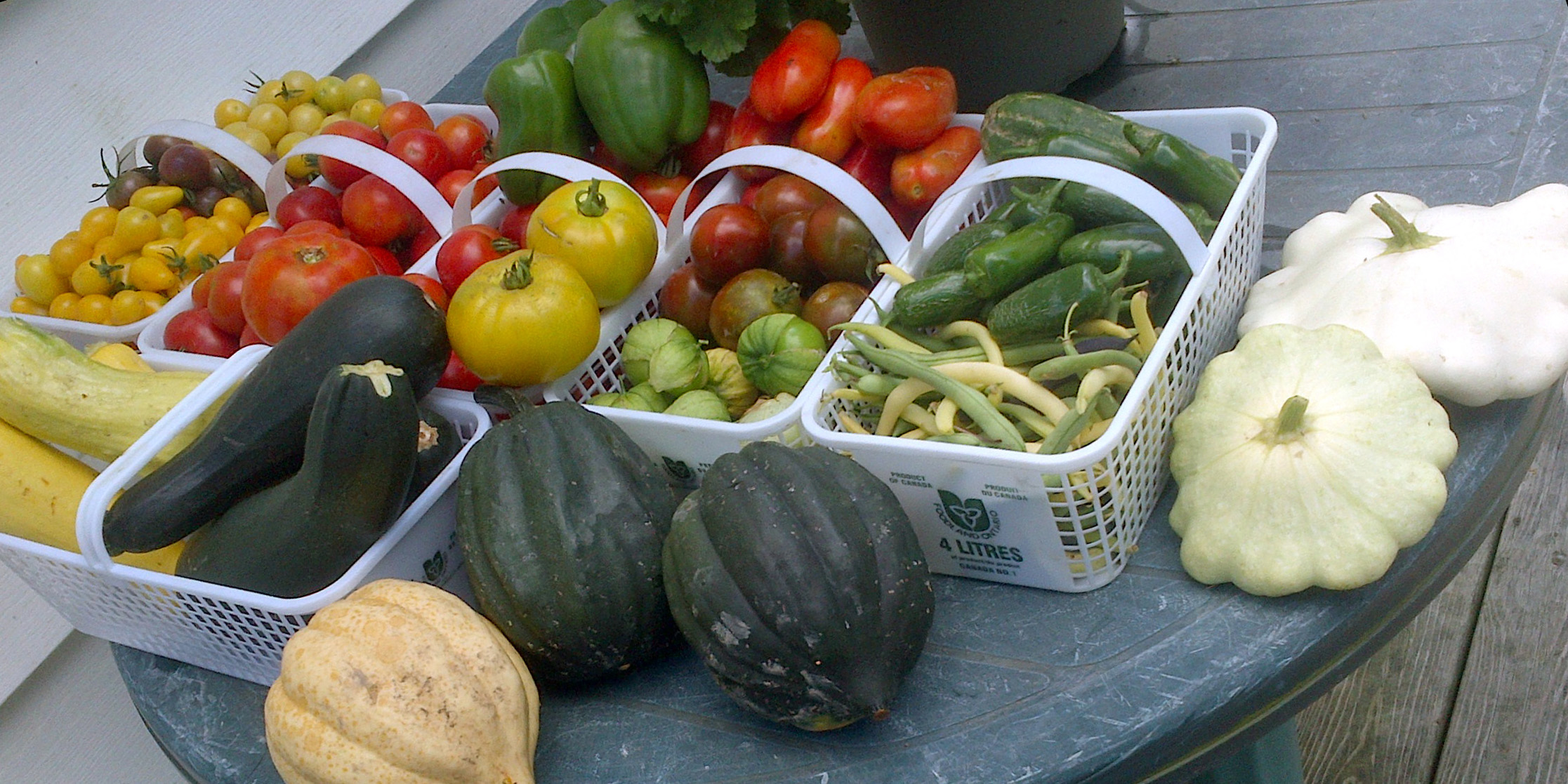 #VictoryGarden: What Should You Grow?